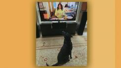 Viewer's dog watching The Rachael Ray Show