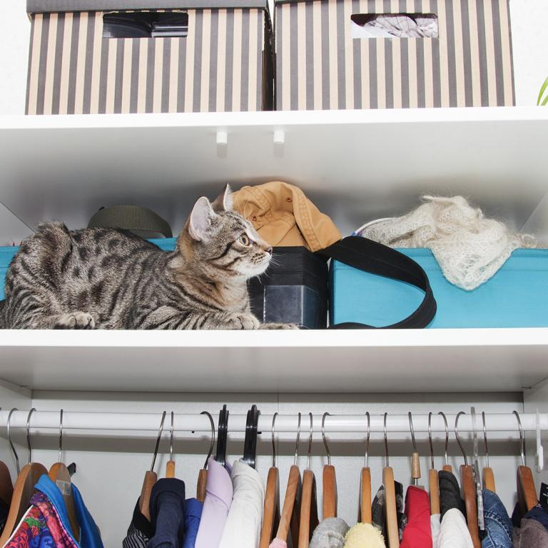 cat in closet during spring cleaning