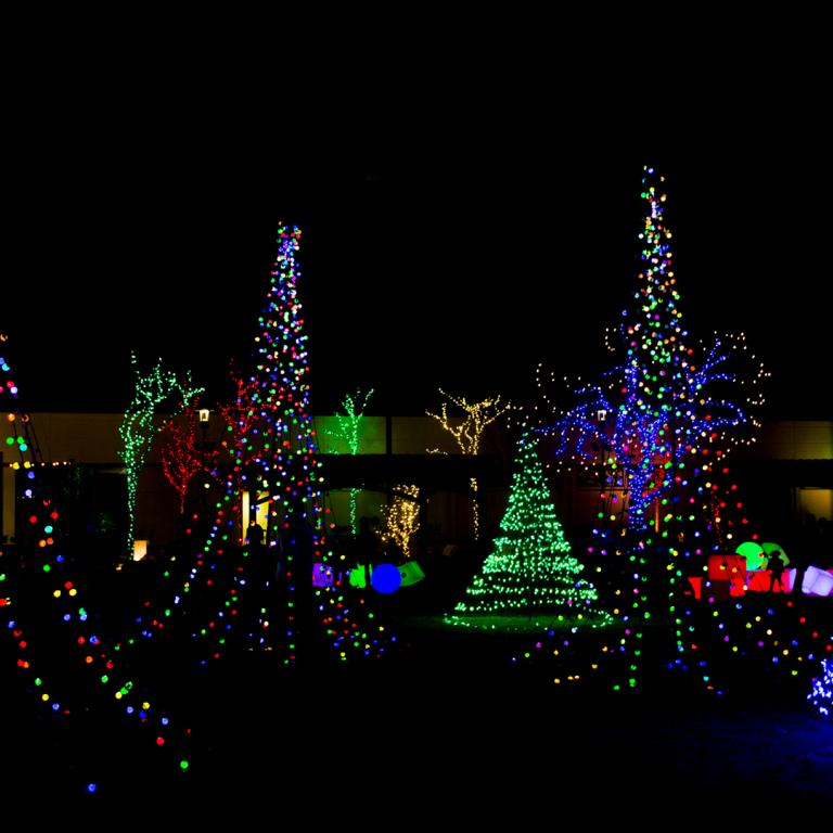 Lit Up Christmas Trees