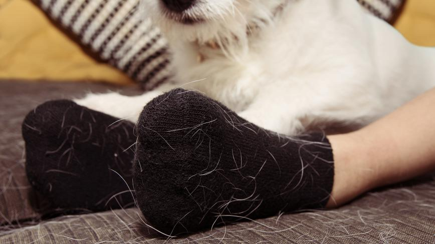 Pet Hair on Socks
