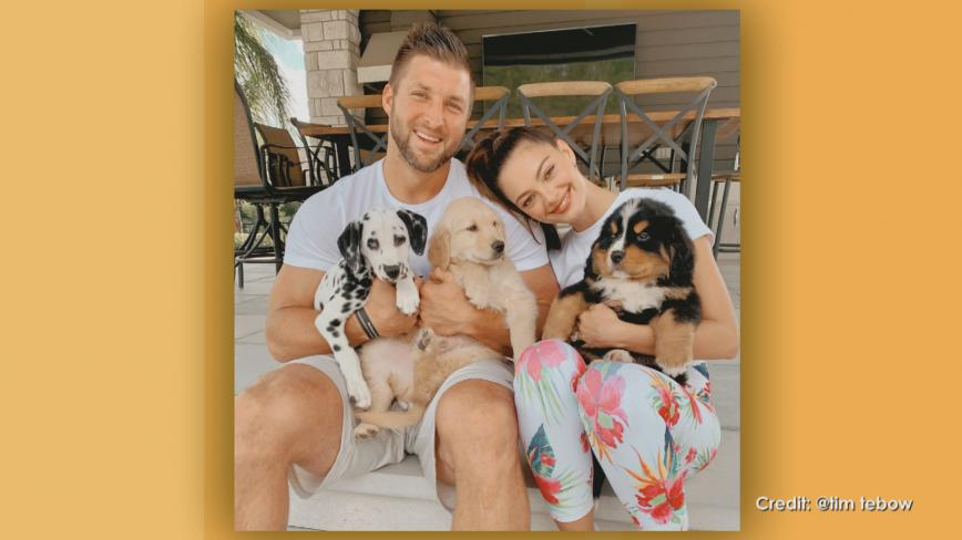 tim tebow with his wife and puppies