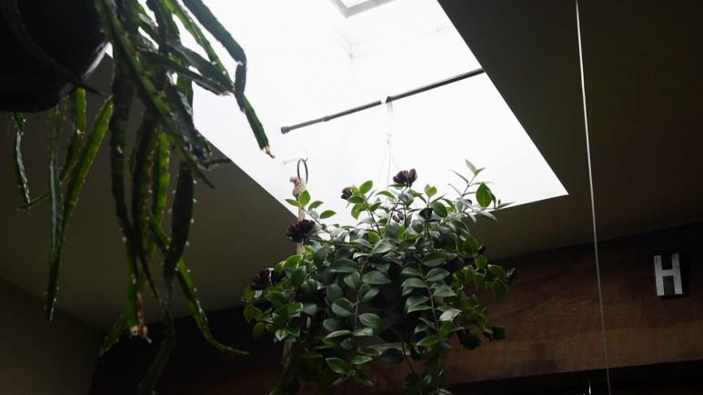 plants hanging from tension rod